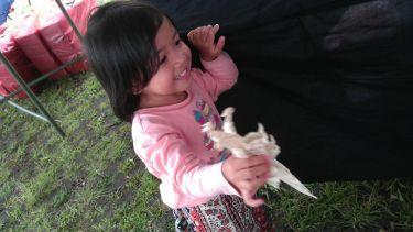Hana dan Origami Dino